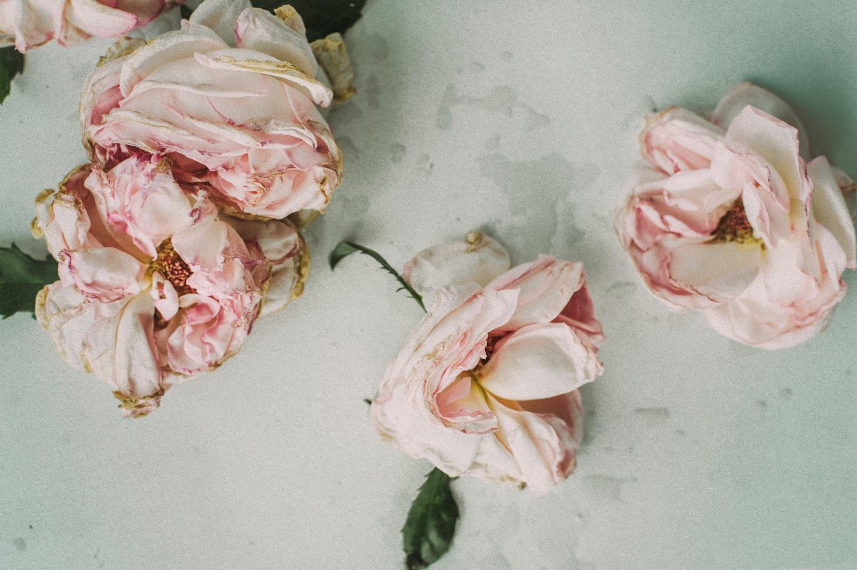 dried-flowers-1149191