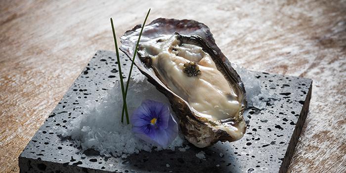 European_Oysters_jpg_1464873550